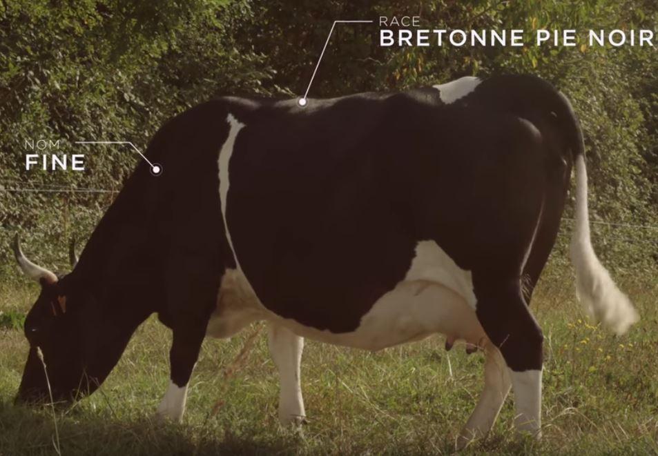 Bretonne Pie Noir (@BretonnePieNoir) | Twitter
