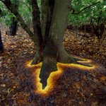 まるでファンタジーの世界!?木から魔法物質が出てる!