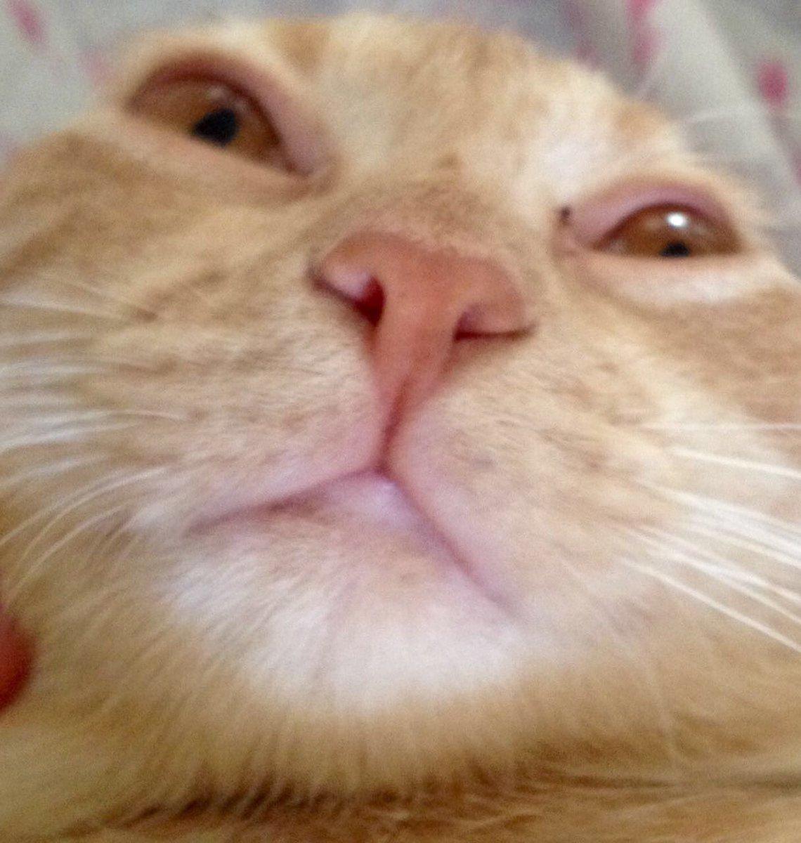 cat sneezing snot