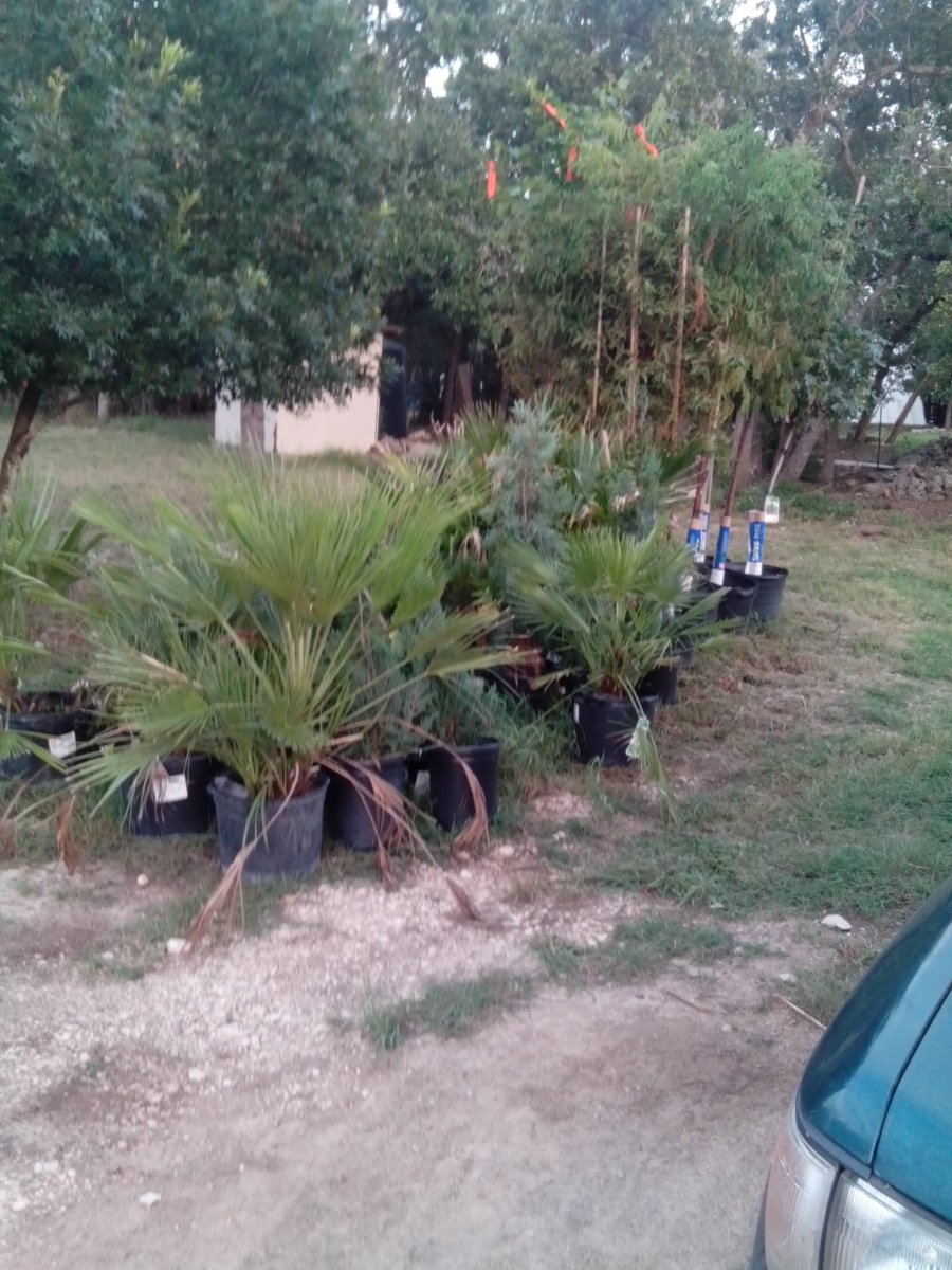 More trees for #Arteland lots of digging !