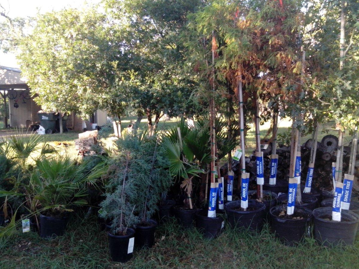 Trees for #Arteland #AustinTexas