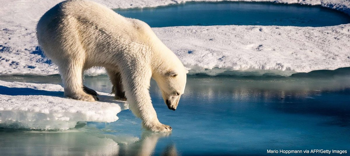 The Arctic is currently experiencing unprecedented levels of social, ecological and environmental change.