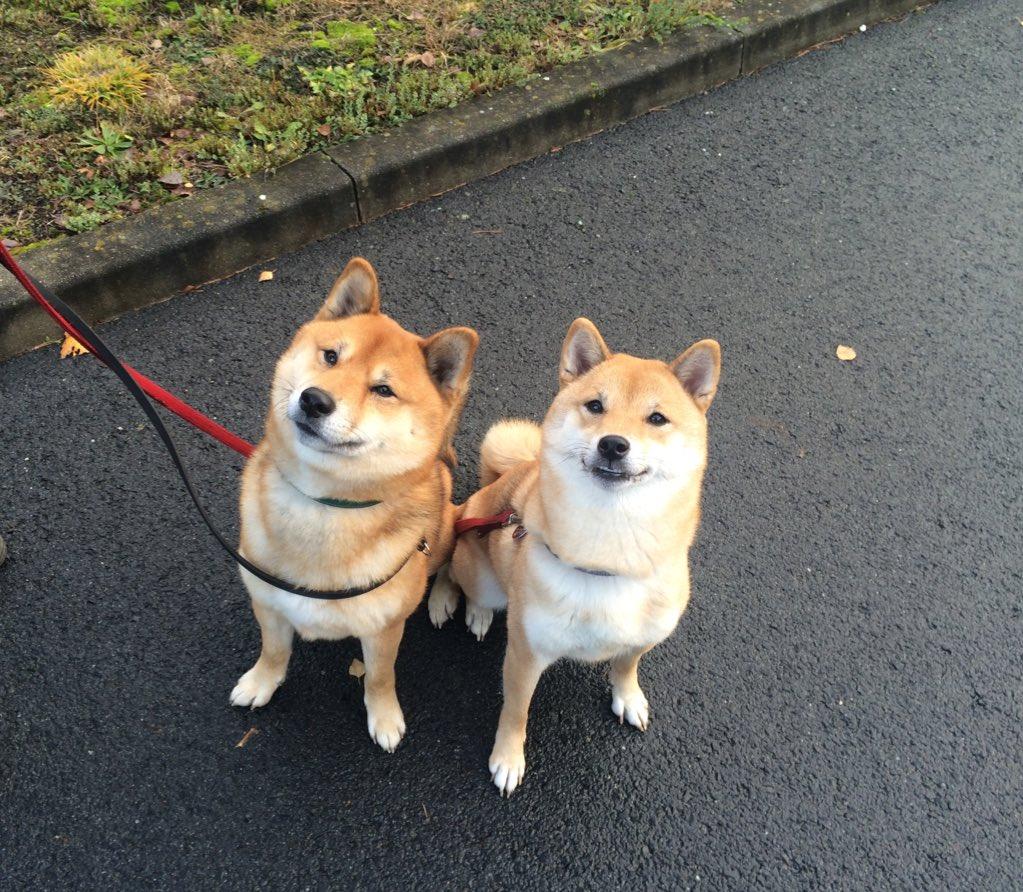 Dating jemand mit Hunden