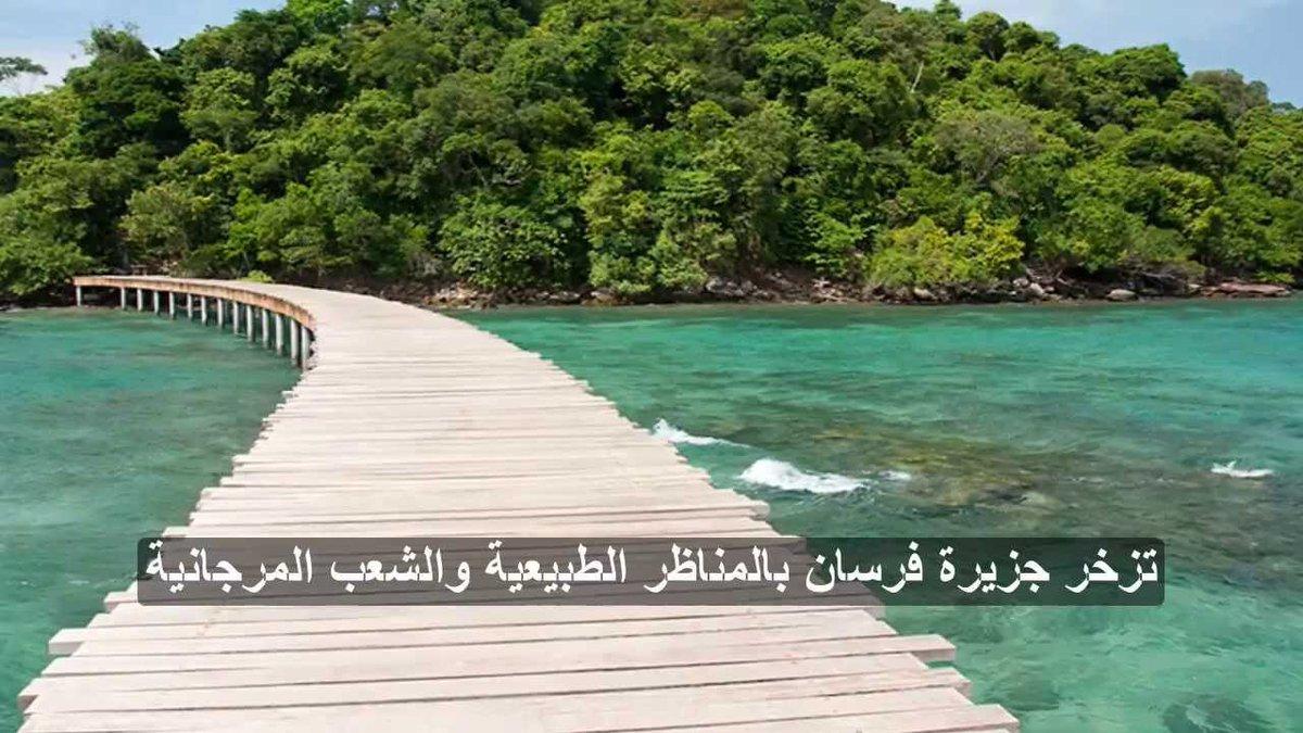 Twitter पर مشاريع السعودية جزيرة ف ر س ان أكبر الجزر التابعة لأرخبيل جزر فرسان تبعد حوالي 50 كم غرب مدينة جازان تتمتع الجزيرة بشواطئ خلابة وتزخر بالحياة الفطرية Https T Co I3uv5e69sl