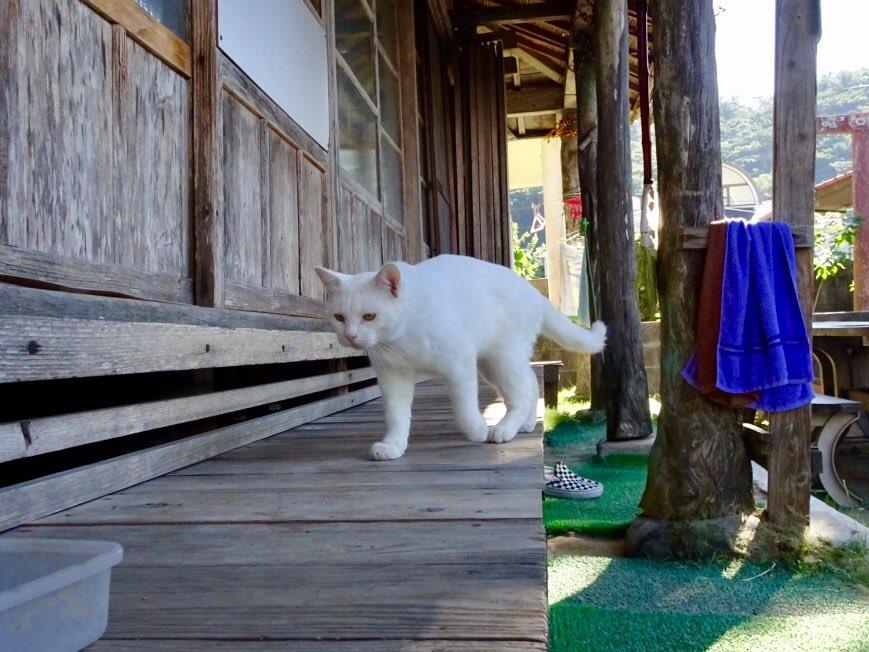 白猫やってきた pic.twitter.com/CCITQNe4Y2