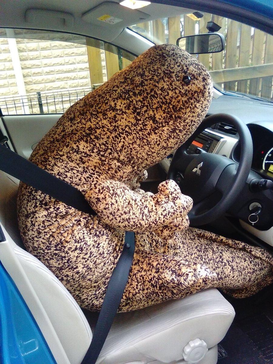 オオサンショウウオぬいぐるみがでかすぎるので車の運転席に乗せてみた(´・ω・`) pic.twitter.com/mVtPzZR0WB
