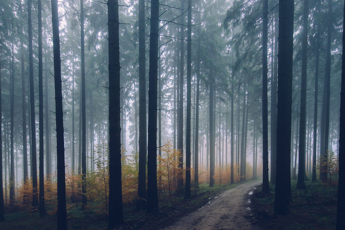 HD Wallpapers On Twitter Amazing Foggy Weather Photo By Jan Erik Waider Tco MhtUZCWVno Forest Fog Trees Nature Wallpaper HDwallpapers