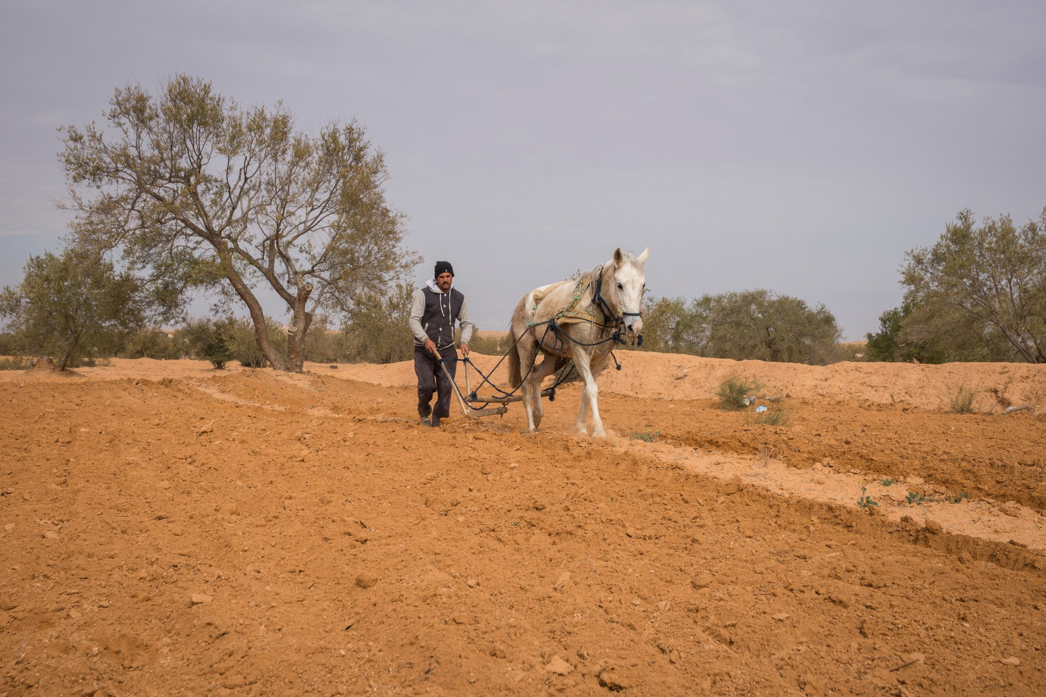 Are we there yet with #science & #technology for #climatechange #adaptation in #MENA? #drylands #COP22: https://t.co/OYx7p8NlyD https://t.co/W4W8lkhTCM