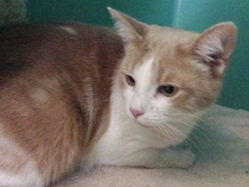 Cats For Adoption In Concord Nh