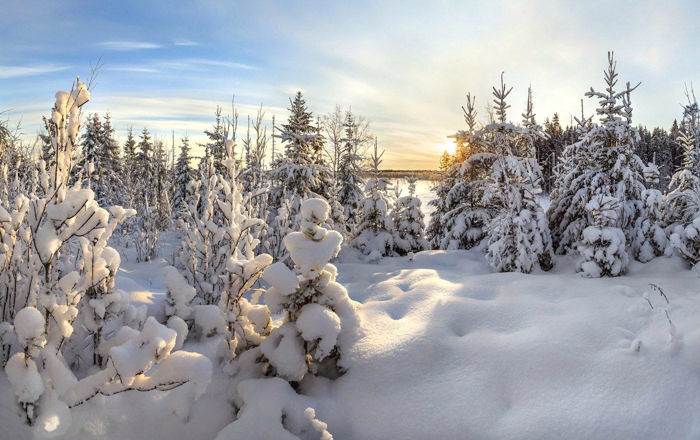 картинки зимний снежный коми лес носим длинные волосы
