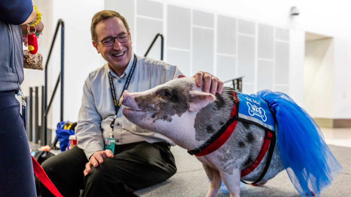Pigs might fly: San Francisco Airport recruits therapy pig to calm stressed passengers https://t.co/VK0UE4RULa https://t.co/IsuPEdxWpl