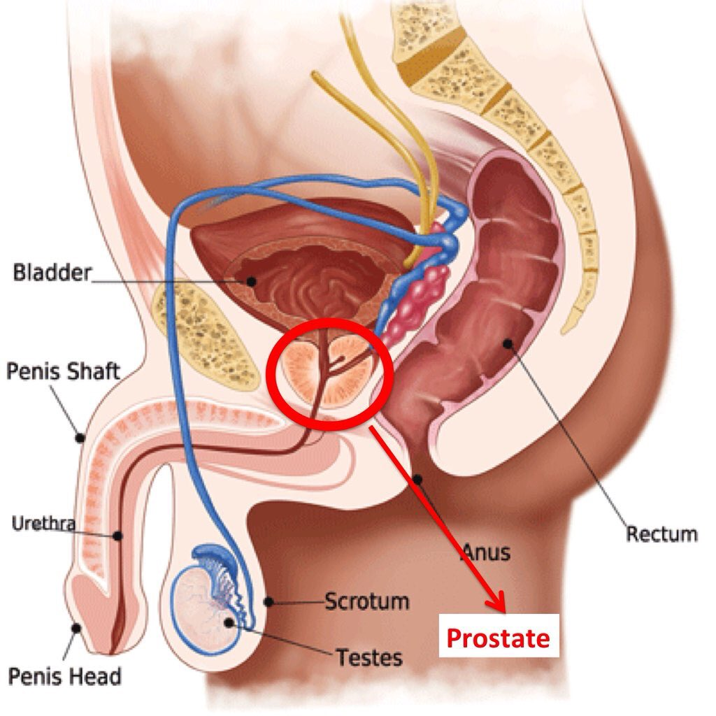 Perfect Male Anus Anatomy Pictures - Human Anatomy Images ...