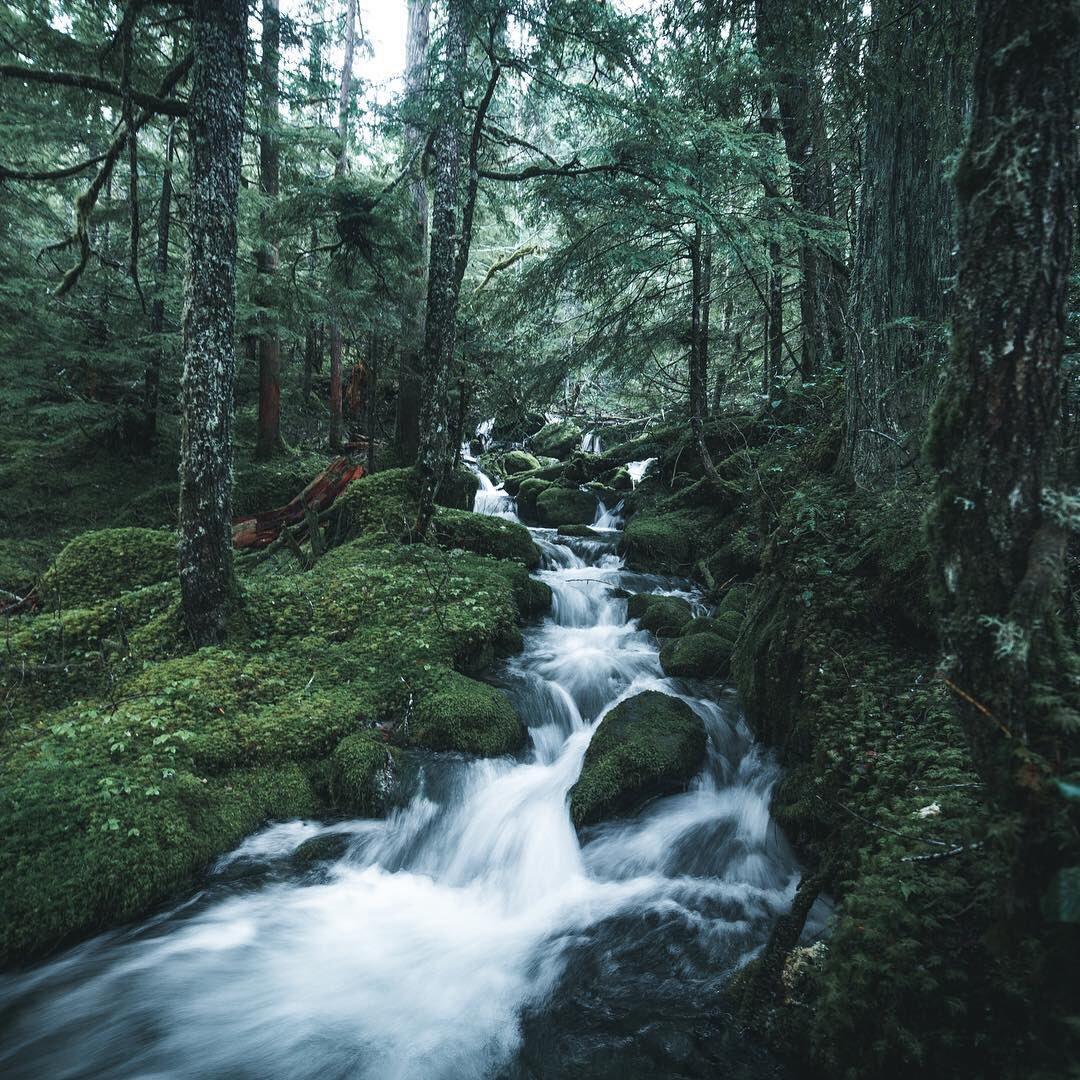 Nature: Nature Vibes 🌲 (@NatureVSCO)