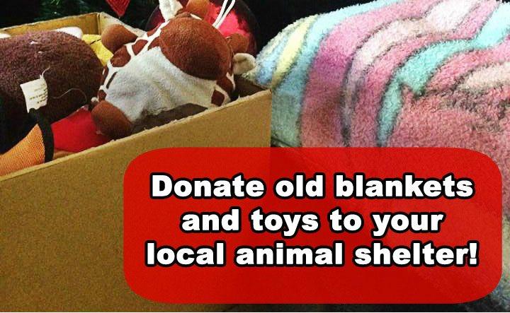 Image result for animal shelter blanket donations