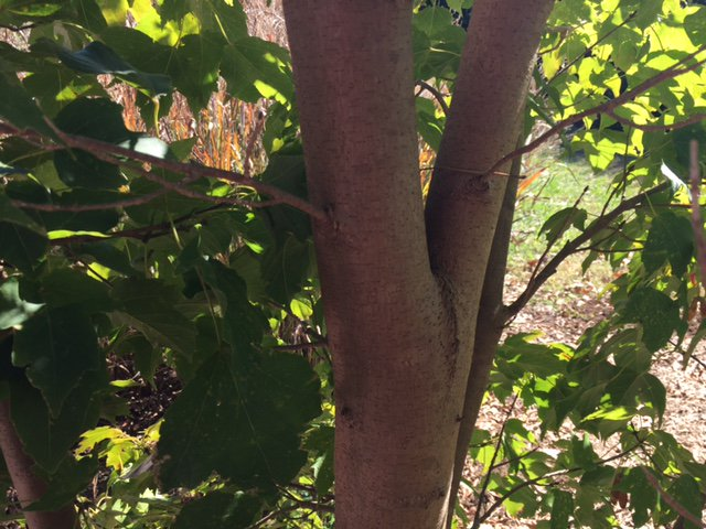 Thumbnail for 11.29.16 #treechat Structural Pruning