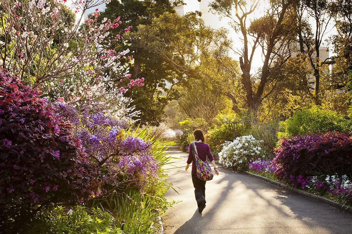 Royal Botanic Garden on Twitter: \