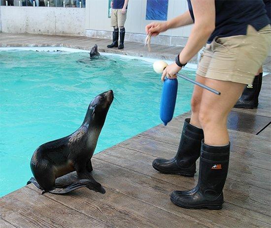 Outings Innings On Twitter New England Aquarium Meet