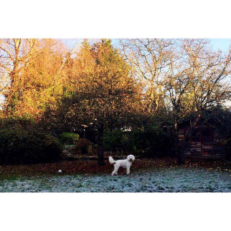 """""""Mum, there's a polar bear in the garden"""" https://t.co/zrTwTibcJU https://t.co/5eVq3chN5M"""