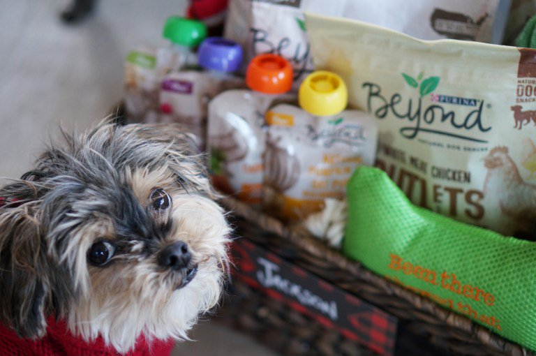 Holiday Dog Gift Basket in 5 easy steps from @redwhitedenim plus #Txt4Pet #deal AD https://t.co/PFLwNSWvH6 https://t.co/CLifqEqFkJ