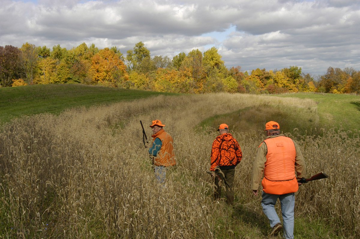 What areas are available for public hunting in Ohio?