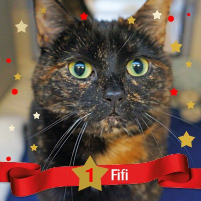 Who's that behind #catvent window No.1? It's Fifi, one of our 2016 sponsor cats. Lets hope she gets a toy for Christmas! https://t.co/MSIZqdsH45