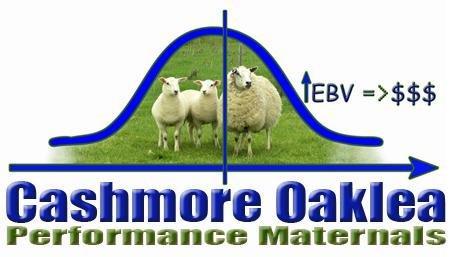 Cashmore Oaklea & clients Auction Plus ewe sale 1.5 yo $227 ewe lambs to $175 5.5 yo ewes to $157 8900 ewes join the national flock Thx JK