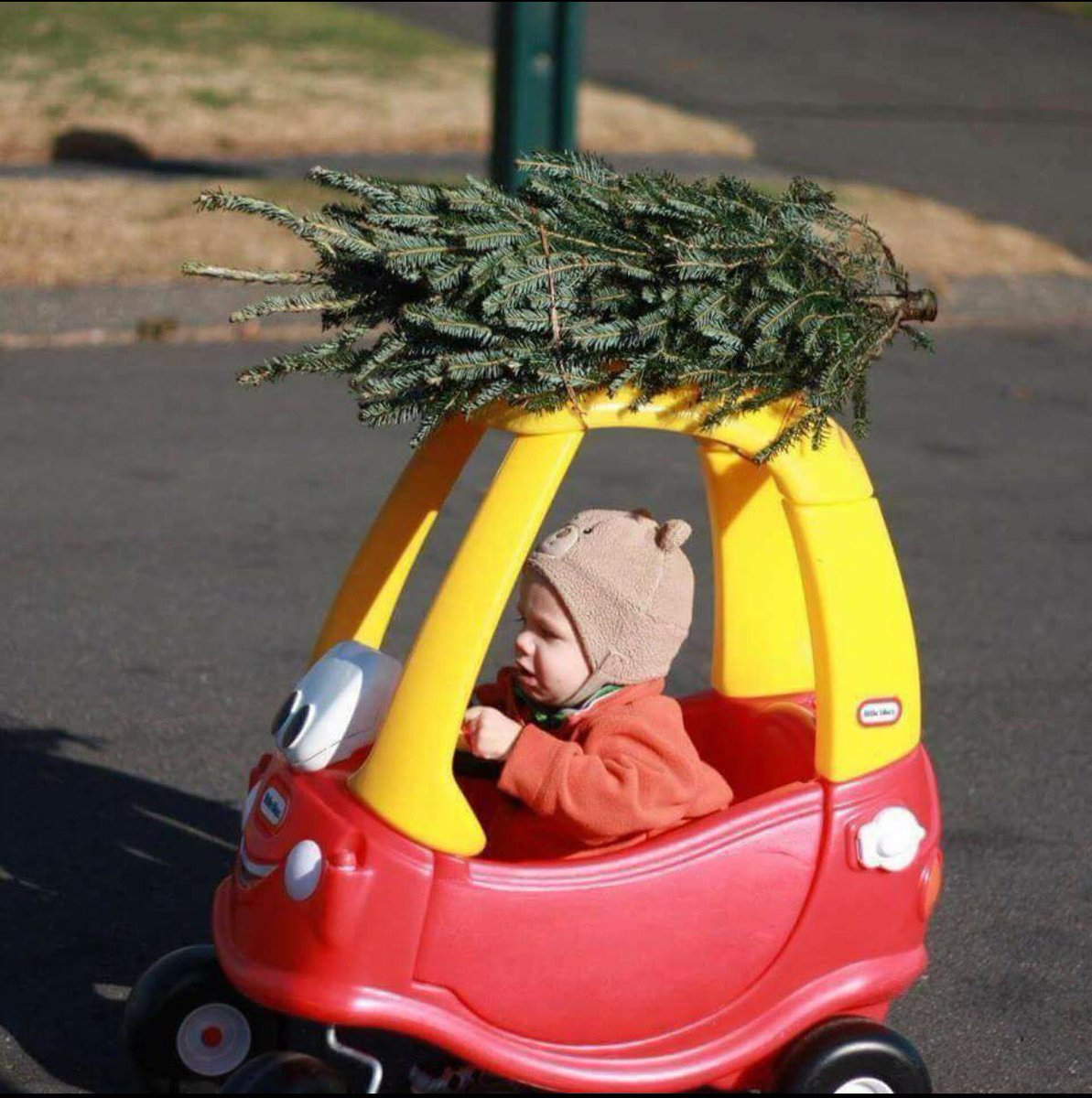 i drove to home depot and picked up our christmas tree dhrmgregorio si62025372 kathy102894 httpstcofcyfbwkdjk