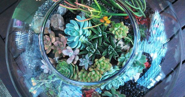 19 inspiring ideas for easy DIY terrariums