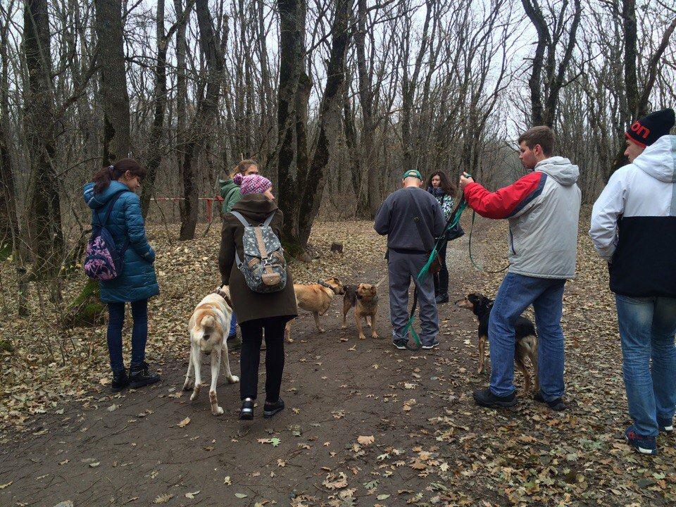 ставропольский приют для животных фото непосредственной близости