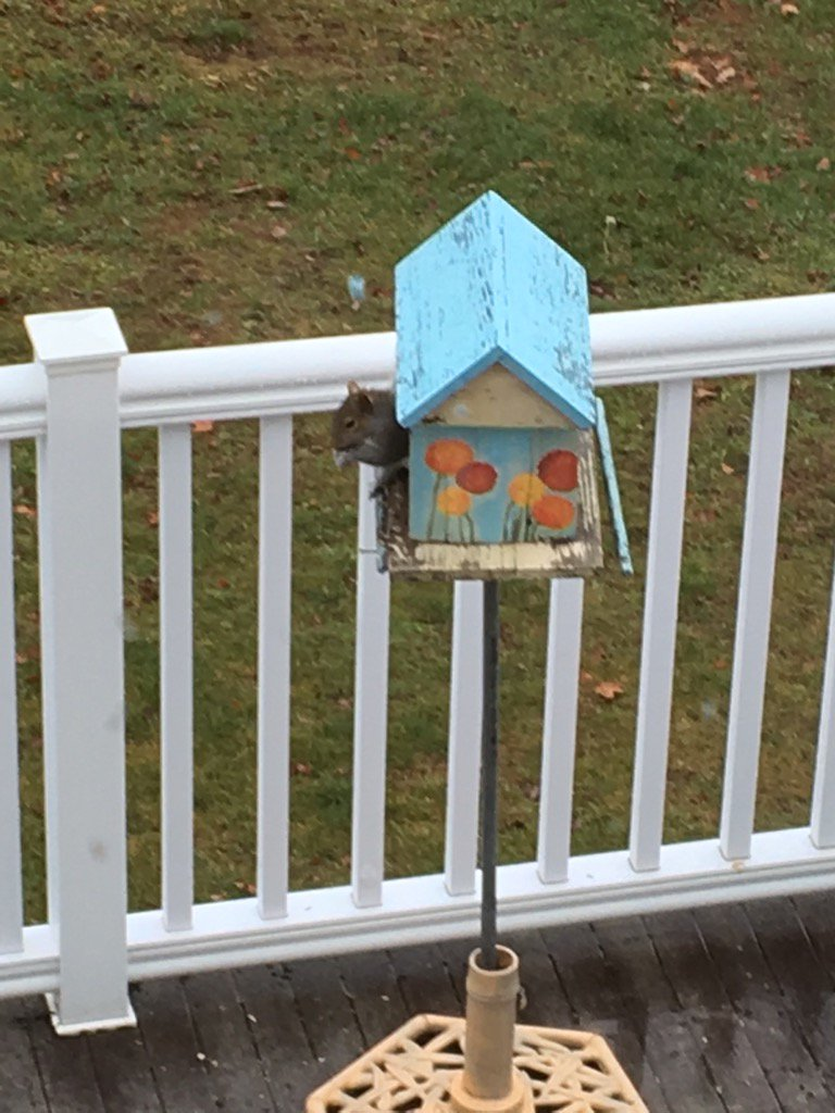 It's easier to accept if you just call it a squirrel feeder https://t....