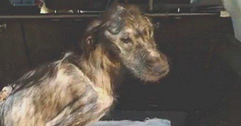 La fabbrica degli orrori, produce a Palermo i suoi cani - https://t.co/8zwfInV8K1 #blogsicilianotizie