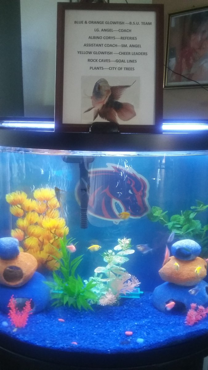 Freshwater aquarium fish boise idaho -  Billkni75775990 7gameday Here Is Our Bsu Fish Tank Go Bsu Bill Judypic Twitter Com Ivcen4e00a