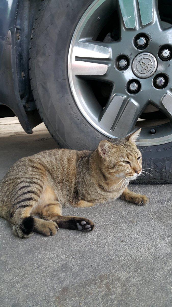 เจอแมวที่วัด เห็นอ้วนกลมดีเลยนั่งลงถ่ายรูป ลดกล้องลงแล้วแมวลุกหนีถึงเห็น ว่ามีแค่สามขา...