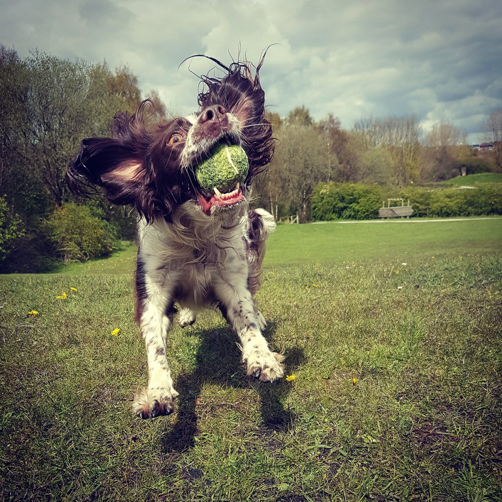 Here\'s our picture, you can click \'d\' and vote for Jess @FinnsLaw @DogsMonthly @dogworldnews @WMP_Dog @RuffWear_UK
