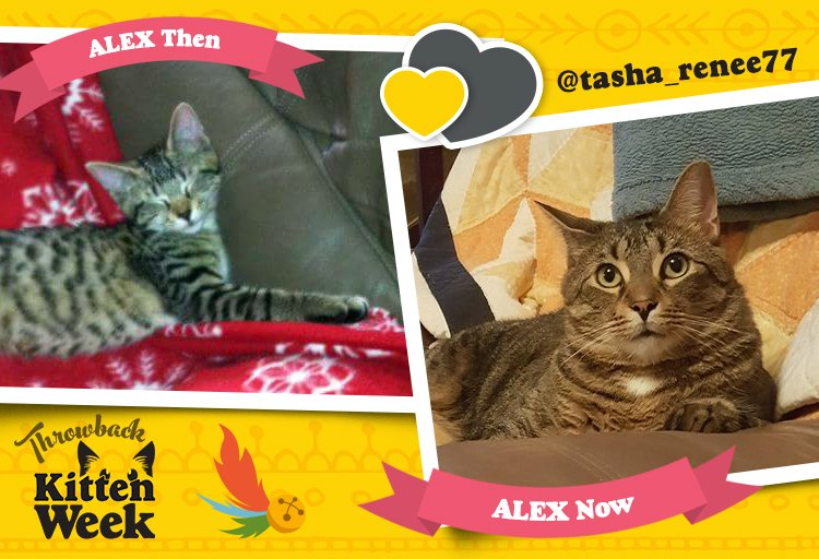 Tidy'll take cutest week ever for $200, Alex. #WhatIs #KittenWeek http...
