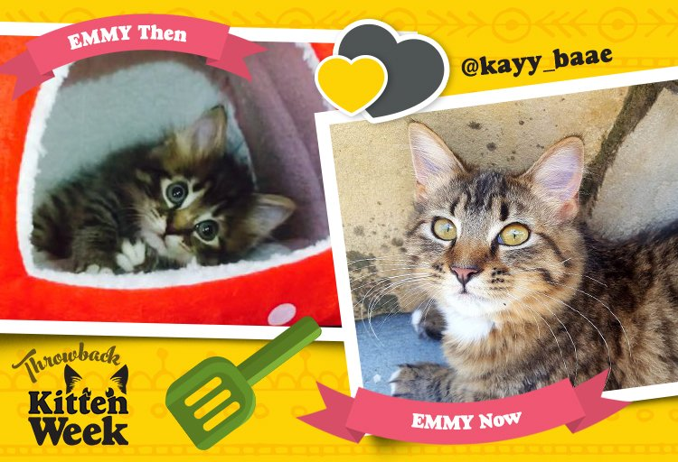 Emmy is so cute they named an award after her. #TrueStory #KittenWeek...