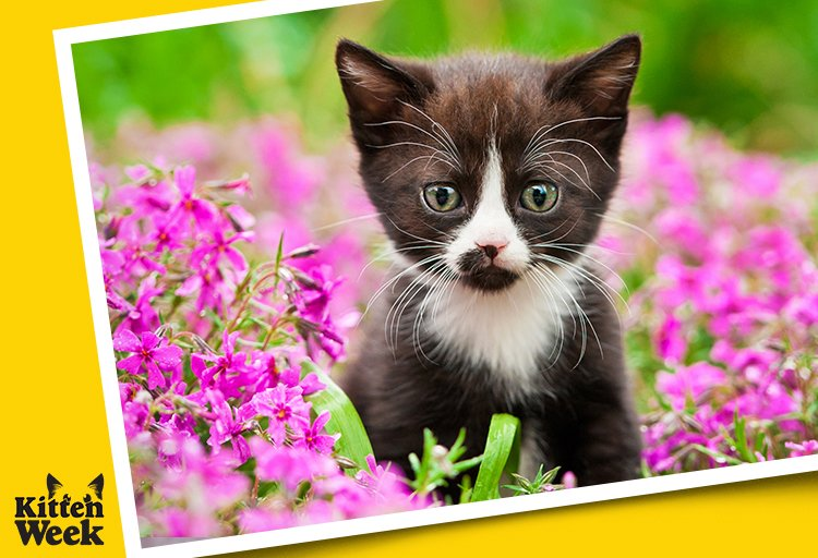 Be the cute you want to see in the world. #KittenWeek https://t.co/LF5...