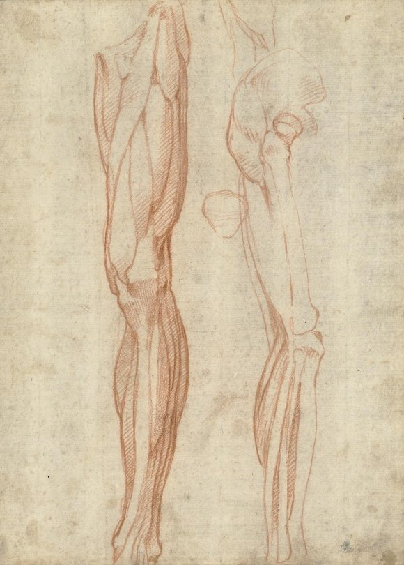 Drawings of the human leg by Michelangelo, c1515. How did he learn to render them so convincingly? Find out here: https://t.co/UU6PgVPwAL https://t.co/jGJKb8HKuV