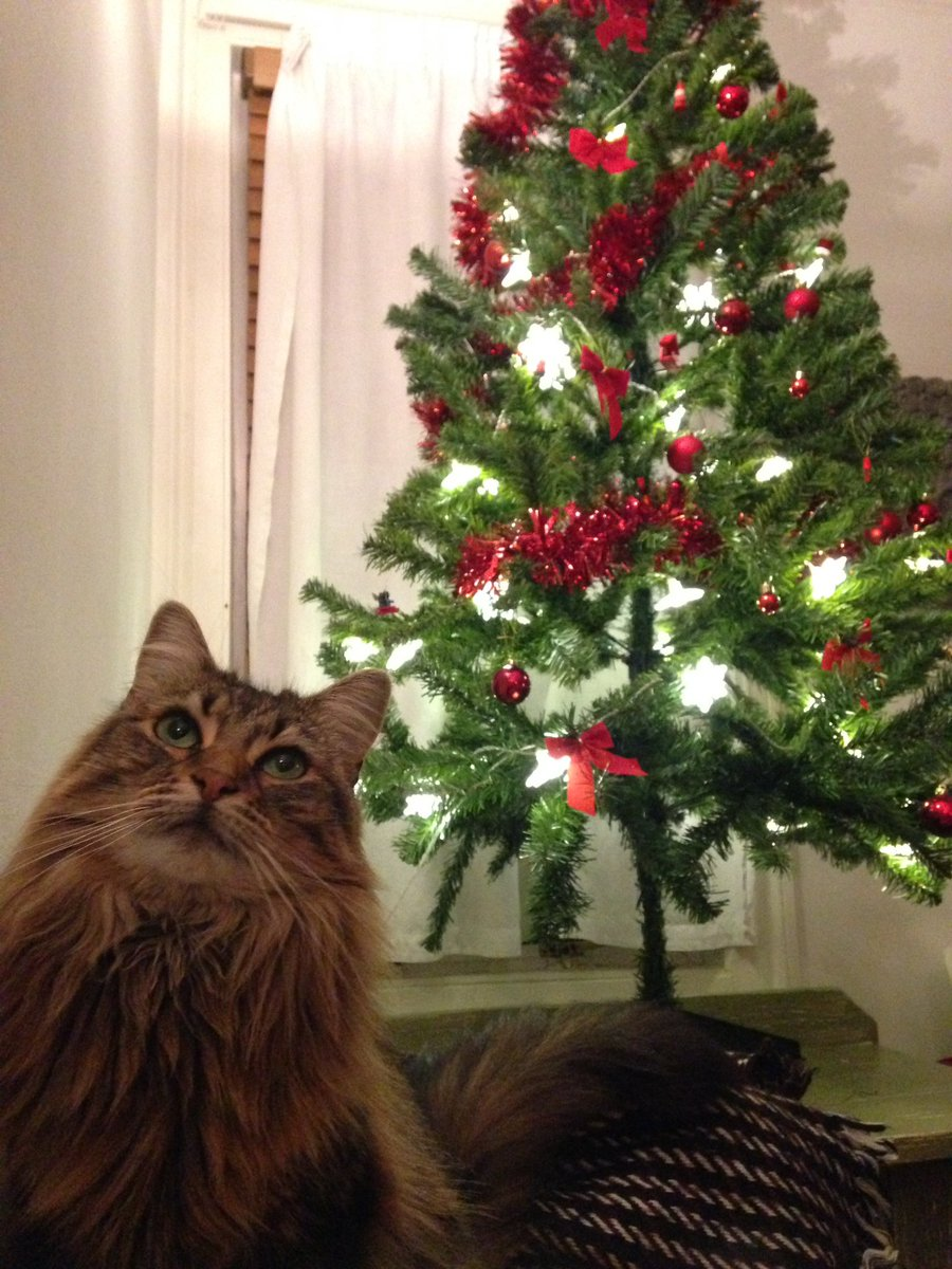 How To Cat Proof Your Christmas Tree.Talkradio On Twitter How The Heck Do You Cat Proof Your