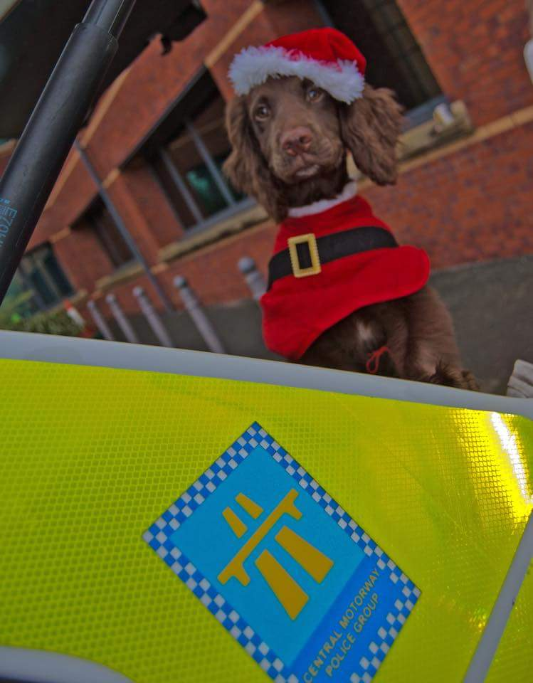 2 years ago today, little Ted was getting into the festive spirit with @CMPG