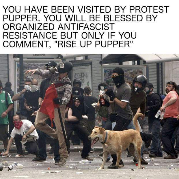 Sometimes you see memes on Facebook that are just too good not to share, Protest Pupper is one of them https://t.co/5qMxMLtXYo