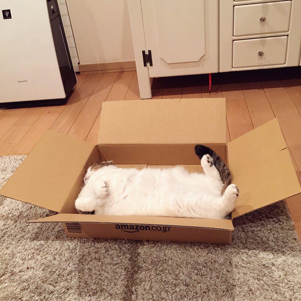 無駄にデカい…と言われるAmazon箱ですが、我が家の場合、無駄ではない。 pic.twitter.com/ojqCos17u4