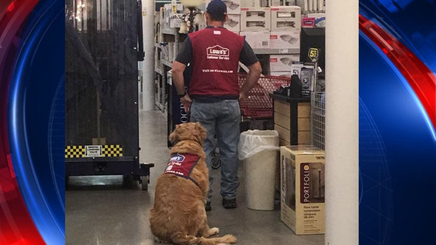 Texas Lowe's hires disabled veteran and his service dog https://t.co/PDQWtoY80Z https://t.co/ng8aoFe4bS