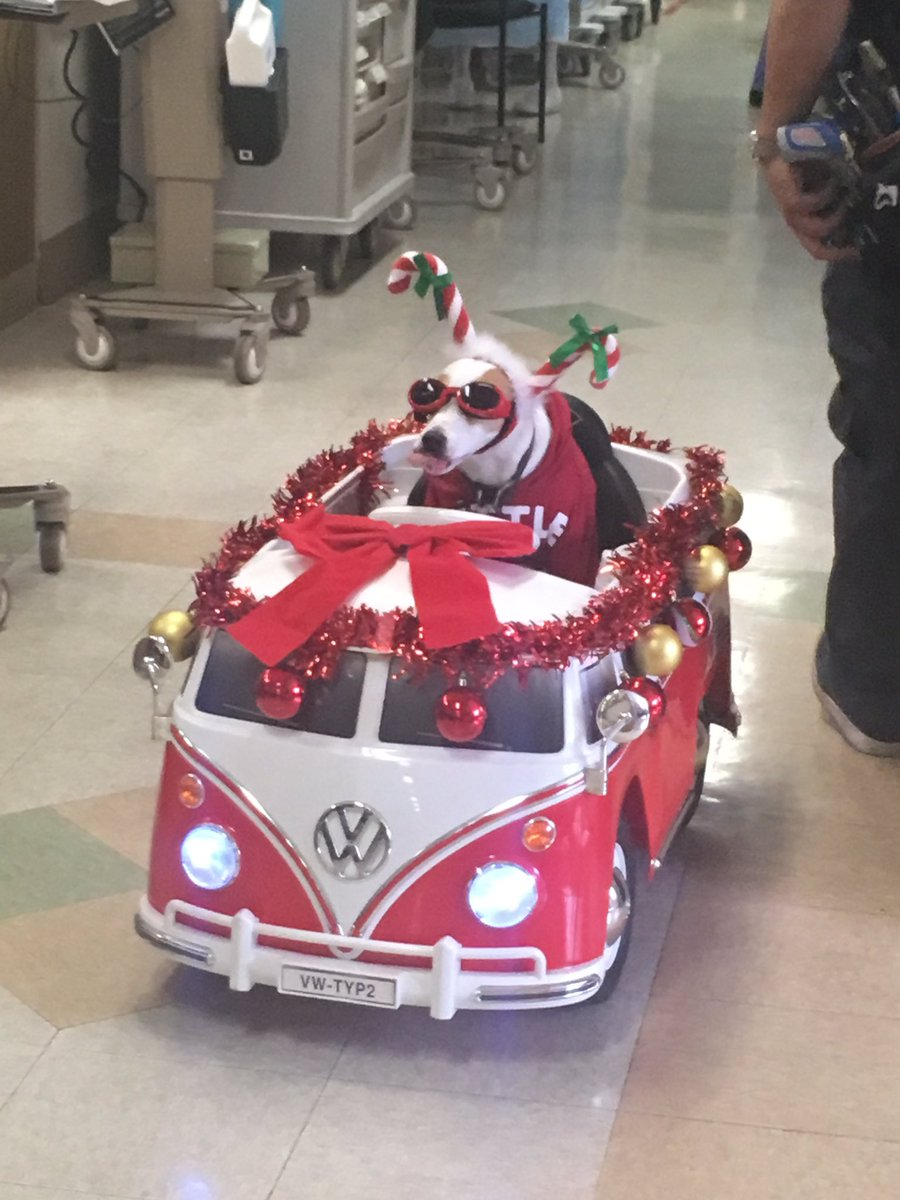 This Dog Spreads Christmas Cheer To Hospital Patients And Couldn't Be Cuter