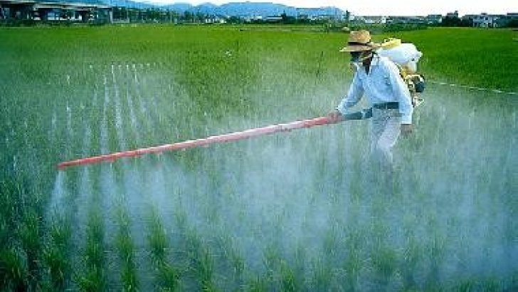 Pesticidi in spezie e verdure provenienti dall'Asia