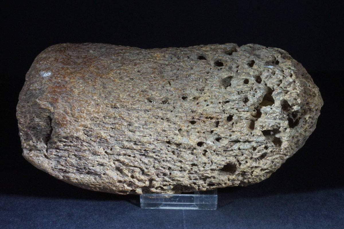 Fossils&Crystals on Twitter: