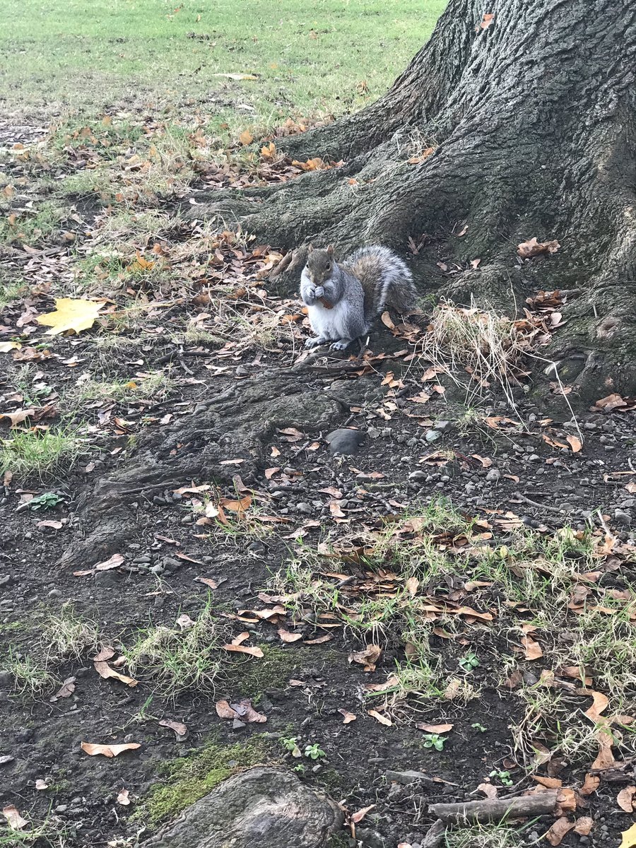 Making friends everywhere we go!😍 #fearless #squirrel #herbertpark #ballsbridge #thedublinjournals https://t.co/9VVFDhEbec