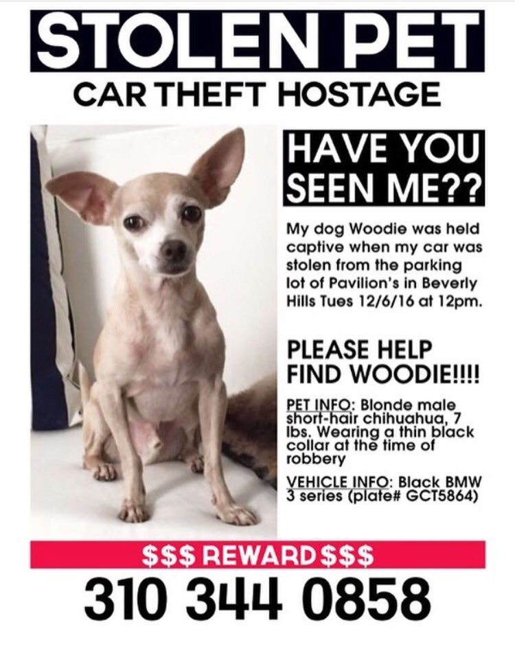 Friend of Tiger Frances just sent this. Please help find WOODIE 🙏