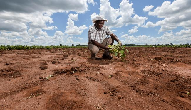 Adapting #Africa's agriculture to withstand the impact of #climatechange requires significant investment https://t.co/kLHyG1W3Na #drylands https://t.co/PKzzC85iyj