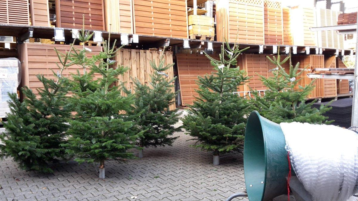 Impressionen Tannenbaum.Holzlandbecker On Twitter Impressionen Weihnachtsbaum Verleih